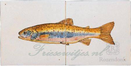 RH2-15c trout