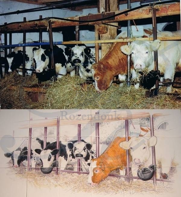 RF15-5, Cows in the stable