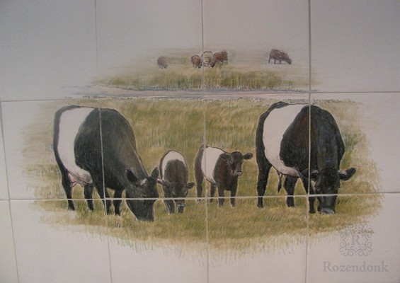 Lakenvelder cows from a private breeder