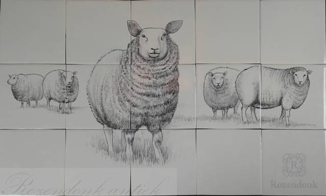 RF15-5 Sheep in the field