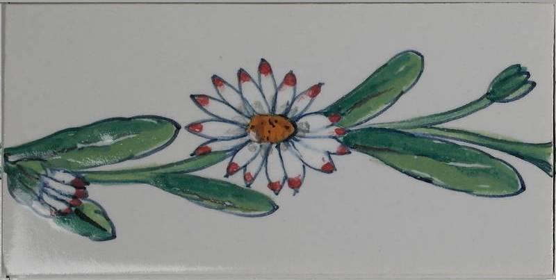 RH0-10, border daisy