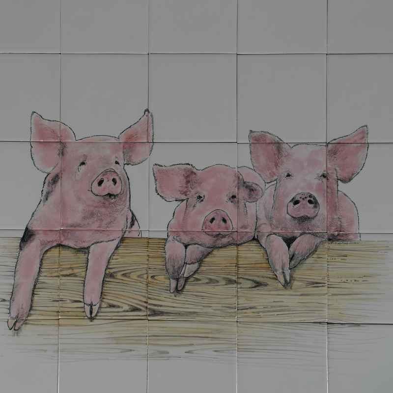 RH20-6 Three curious pigs