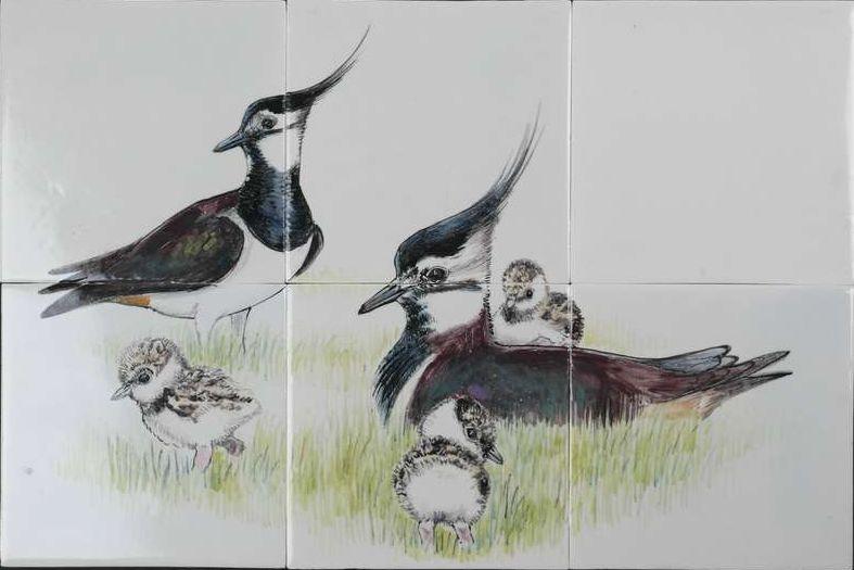 RH12-56 lapwings nest